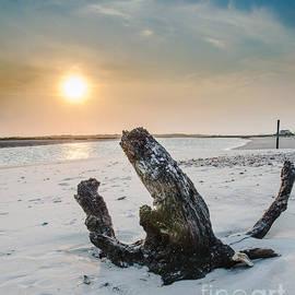Jh Photos - Oak Island Driftwood