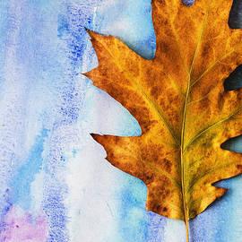 Vishwanath Bhat - Oak leaf on water color background