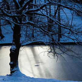 Alexander Senin - Oak Tree And Winter Sun