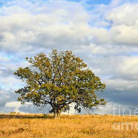 Charline Xia - Oak Tree