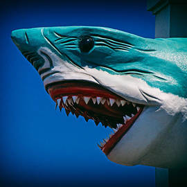 Bill Swartwout - Ocean City Shark Attack