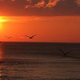 Allan Morrison - Ocean Sunset
