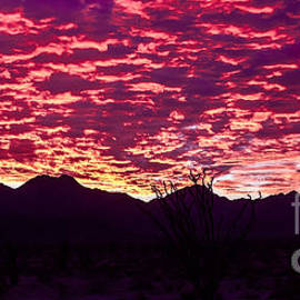 Robert Bales - Ocotillo Sunrise