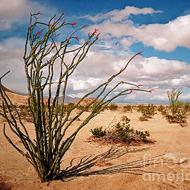 Bob and Nadine Johnston - Octillio Cactus Painting Organ Pipe Arizona