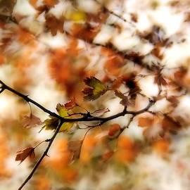 Reka Lendvai - October