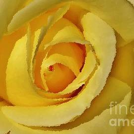 Jamie Potter - Oil of a rose