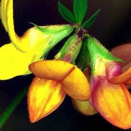 Maggie Vlazny -  Yellow and Orange Trefoil Flower Painting