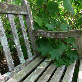 Lori Pessin Lafargue - Old Bench Seeks Young Lovers