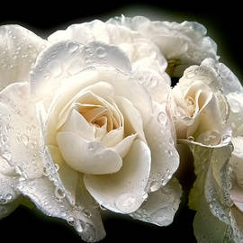 Jennie Marie Schell - Old Lace Rose Bouquet