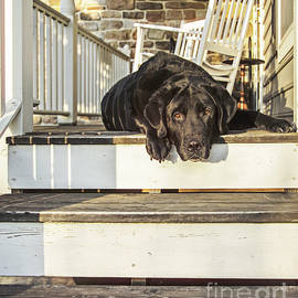 Diane Diederich - Old Porch Dog