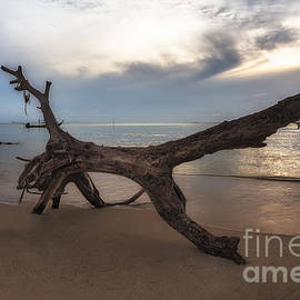 Joerg Gundlach - old Tree on the Beach
