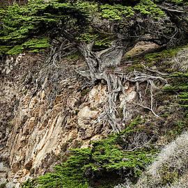 George Buxbaum - Old Veteren Cypress Tree
