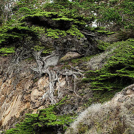 George Buxbaum - Old Veteren Cypress Tree II