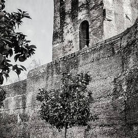 Joan Carroll - Old Walls Orange Trees and a Bike BW