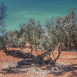 Curtis Radclyffe - Olive Tree