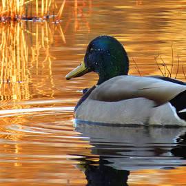 Dianne Cowen - On Golden Pond