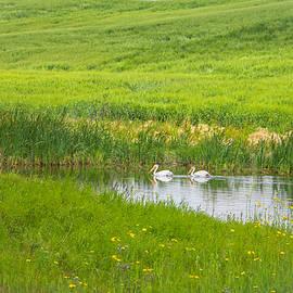 Lisa Holland - On Golden Pond