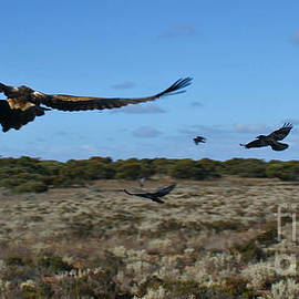 Jani-Mari Pieterse - On wings