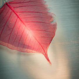Jan Bickerton - One Red Leaf