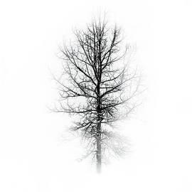 Debbie Nobile - One Tree