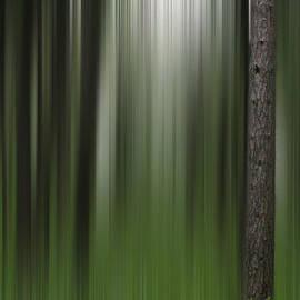 David Simons - One Tree Visible