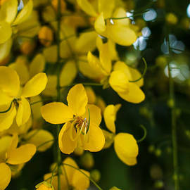 Mario Morales Rubi - Open Heart Yellow