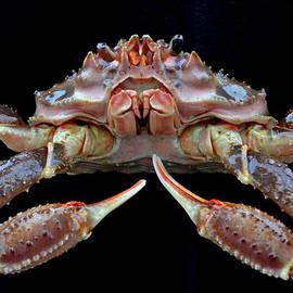 Relihan Art - Opilio crab - close up