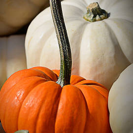 Julie Palencia - Orange and White Pumpkins
