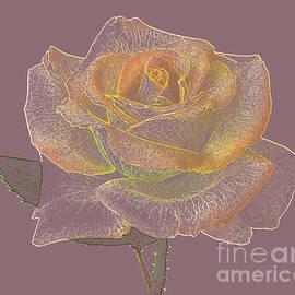 Rosemary Calvert - Orange And Yellow Rose