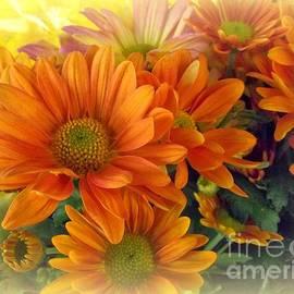 Miriam Danar - Flower Photography - Orange Beauty