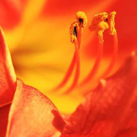 Lali Kacharava - Orange blooming