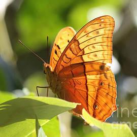 Jola Martysz - Orange Butterfly