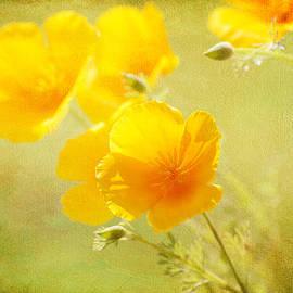 Lynn Bauer - Orange California Poppies