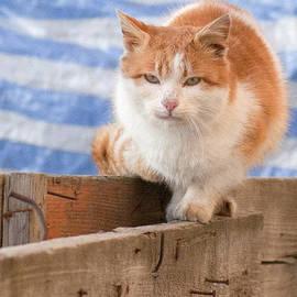 Vlad Baciu - Orange cat