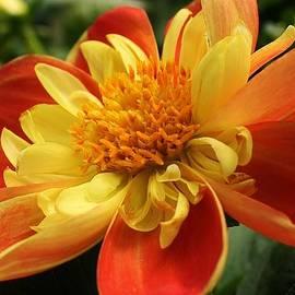 Bruce Bley - Orange Crush