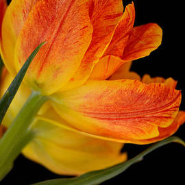 Deb Halloran - Orange Crush