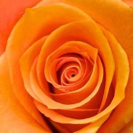 Kristina Deane - Orange Delight