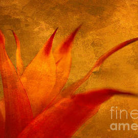 Arlene Carmel - Orange Fire