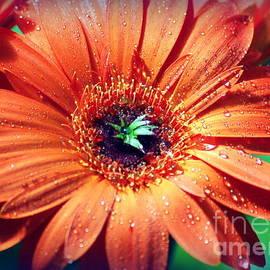 Katie Jeans - Orange Flower