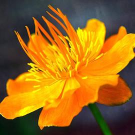 Mary Machare - Orange Flower