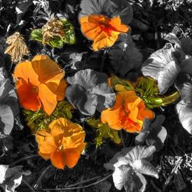 John Straton - Orange Flowers
