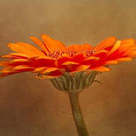 Robert Murray - Orange Gerbera