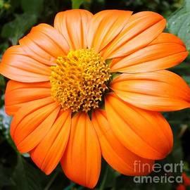 Barbie Corbett-Newmin - Orange in Bloom