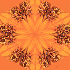 Kristy Jeppson - Orange Kaleidoscope