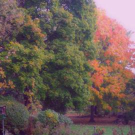 Frank J Casella - Orange Leaves