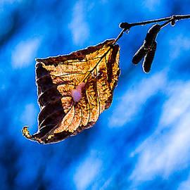 Alexander Senin - Orange Light Of January - 1