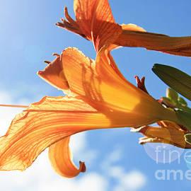 Lali Kacharava - Orange lily