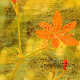 Rosalie Scanlon - Orange Lily Texture