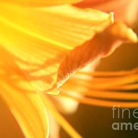 Lali Kacharava - Orange lily1
