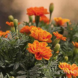Janice Rae Pariza - Orange Marigolds